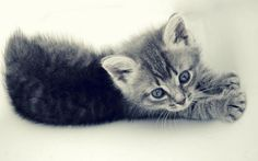 100 Cute Kittens Pictures