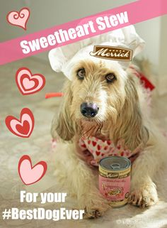 My GBGV Life | @MerrickPetCare Sweetheart Stew healthy, grain free wet food for your #bestdogever