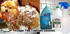 Flea Treatment with Vinegar Solution - put a few drops on vinegar in their water to help prevent fleas.