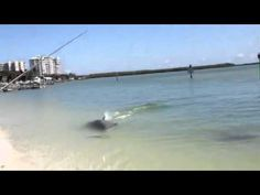 Dolphin vs snook pt2