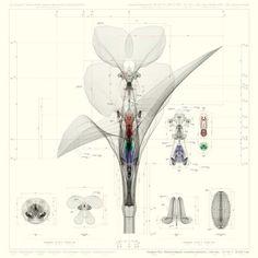 cerreyes-dpr-bcn:  Inorganic Flora | Macoto Murayama[2011]