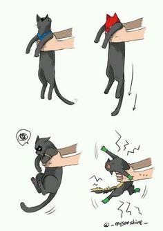 Kitties #Batfam