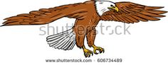 Drawing sketch style illustration of bald eagle swooping wings flapping viewed from the side set on isolated white background.   #eagle #sketch #illustration