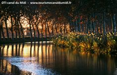 Canal du Midi - Capestang