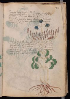 Illustrated with fantastical plants and nude women, the Voynich Manuscript has baffled centuries of experts.