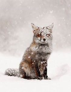 Hello there, little fox! #coldweather