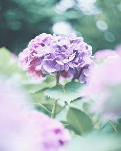 "339 lượt thích, 1 bình luận - ᴹᴬᴷᴵ (@____m.a.k.i____) trên Instagram: ""* 晴れたー ♪♪ / やったー ♪♪ / * * #igersjp #insta_pics_blossoms #ip_blossoms #team_jp_flower #team_jp_…"""