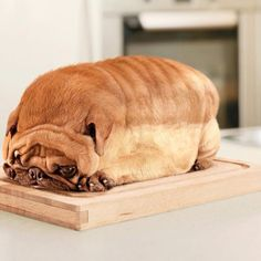 Is that a loaf of bread made to look like a dog, or a dog made to look like a loaf of bread? lol!