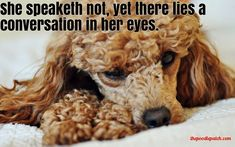 SHE SPEAKETH NOT YET THERE LIES A CONVERSATION IN HER EYES