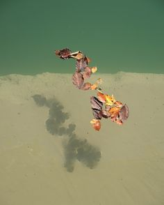 Floating Leaves by Karl Seitinger 2014 That Look, Leaves, Interiors, Sweet, Water, Photography, Candy, Gripe Water, Photograph
