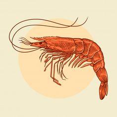 Shrimp Cartoon, Pet Shrimp, Imprimibles Paw Patrol, Doodle Frames, Fish Drawings, Japanese Typography, Typography Poster, Typography Design, Vintage Drawing
