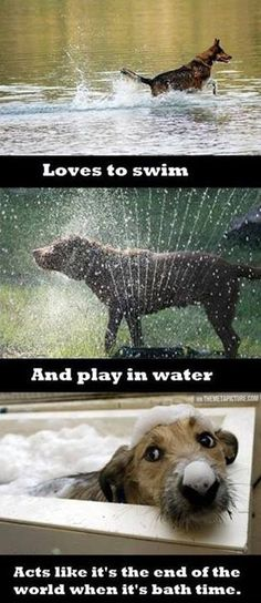 I see my big dog in the first two but he loves baths so for the last one I see my little dog.