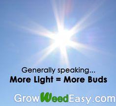 Generally speaking, more light = more buds. Source: http://growweedeasy.com/growing-marijuana-what-type-of-lights