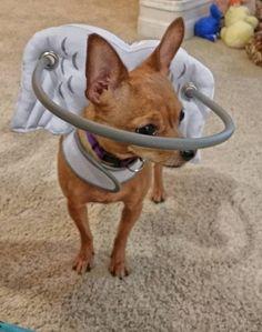 160 Ideas De Bolsos Para Perros En 2021 Bolso Para Perro Perros Ropa Para Perros