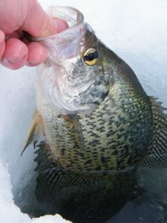 Scratching the Panfish Itch   The Outdoor Report
