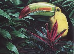 "Evangeline ""Eve"" Burge: Fine Art: Toucan eveburge.com Toucan. This piece is drawn entirely in PrismaColor pencil on red drawing ..."