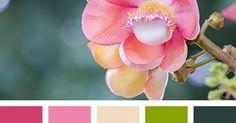 Liked on Pinterest: бледно-розовый бордовый винтажные цвета оттенки болотно-зеленого оттенки светло-розового подбор пастельных тонов светло-оливковый темно-болотный цвет цвет оливки цвет хаки.