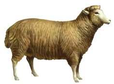 Sheep PNG Clipart Picture