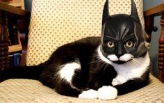 Na-na, na-na, na-na, na-na, na-na, na-na, na-na na-na, BatCat!!! I Love Cats, Crazy Cats, Cute Cats, Funny Cats, Funny Animals, Cute Animals, Adorable Kittens, Farm Animals, Batman Mask
