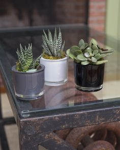 Classic Glass Mini Succulents, Set of 3