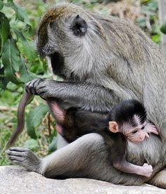 Macacos em zoológico de Freiburg, na Alemanha.  Fotografia: AP.