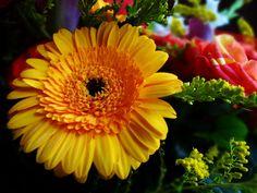 Kwiatuszki od Chłopaka <3