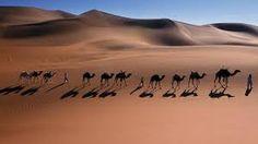 صحاري صحراء بيداء - بحث Google