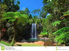 Photo about Tree fern and waterfall in tropical rain forest paradise at Millaa Millaa falls Tablelands Queensland Australia lush green pristine rainforest. Image of purity, tablelands, queensland - 21454957 Cairns Australia, Australia Travel, Waterfall Paintings, Tree Fern, Forest Pictures, Road Trip Adventure, Tree Wallpaper, Outdoor Fun, Scenery