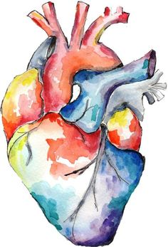 Anatomy of Love | Human Heart Watercolor Print | DIY ...
