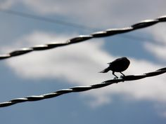 A black bird on a wire