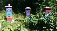 Beehives at Coastal Maine Botanical Gardens