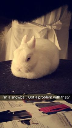 I'm a snowball. Got a problem with that?