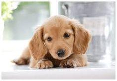 「犬 画像」の画像検索結果