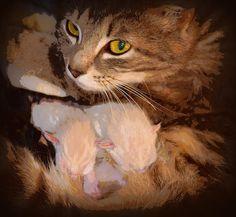 white kittens, kittens, cat, feline, tiger stripped, tiger stripped kitten, gray stripped kitten , baby kitten, small kitten, cat photography, baby animals, nature, kitten print, kitten photography, baby kitten print, cat print, kitten framed print, kitten canvas print, kitten metal print, kitten acrylic print, kitten greeting card, kitten wall art, kitten art, cat art print, kitten art print, tiger stripped kitten art print, feline art print, art, cat art, cat metal print, new born kittens,