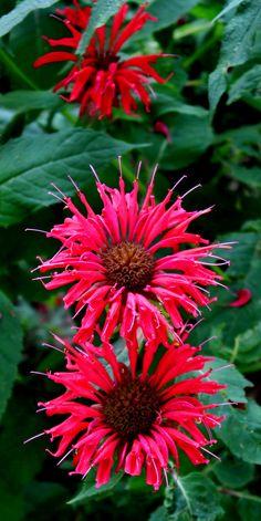 Amy's flowers..