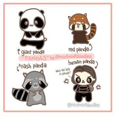 Pandas. Which one is your favorite? :)    #panda #giantpanda #redpanda #trashpanda #raccoon #humanpanda #buckybarnes #wintersoldier #mintmintdoodles #sebastianstan