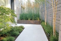 narrow concrete in back, by taking out area for plants