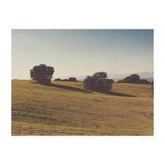 Tarde de Domingo (II). #majadahonda #Madrid #spain #huerteam #huerto #sunday #sundayevening #domingo #igs #igers #igersmadrid #igersspain #campo #country #trees #arboles #encina #tarde