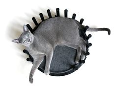 This stunning piece of feline design is from Giotto Cat Furniture in London. Giotto's Pet Lounger is named after this gorgeous Russian Blue, who is the inspiration for his parents, Rob and Giia. Rob is a product designer and Giia. Crazy Cat Lady, Crazy Cats, Korat Cat, Cat Cushion, Pet Furniture, Black Stains, Russian Blue, All About Cats, Pet Life
