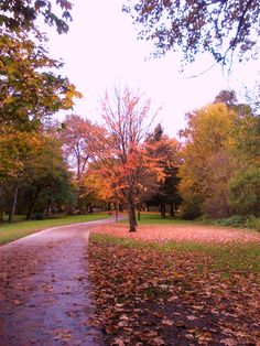 Fall in Eugene, OR
