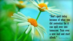 quote of Mufti Ismail Menk White Rose Flower, White Roses, Nouman Ali Khan, New Leaf, Flowers, Quotes, Red Rose Flower, All Flowers, Blur