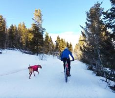 5 Dog-Friendly Winter Hikes in Estes Park Mtb Trails, Park Trails, Co Trip, Dog Friendly Hotels, Mountain Bike Trails, Forest Service, Winter Hiking, Cross Country Skiing, Rocky Mountain National Park