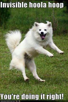 #funny #dog #pet #dancing.