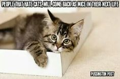 Cat haters