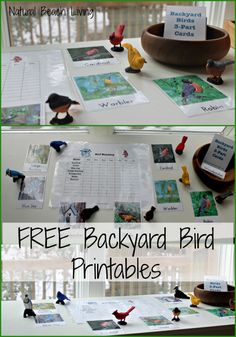 Observing & Learning Backyard Birds with Free Printables - Best Bird Activities for Kids - Kids Ideas Montessori Activities, Activities For Kids, Crafts For Kids, Primary Activities, Montessori Classroom, Animal Activities, Spring Activities, Preschool Learning, Preschool Ideas