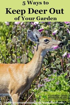 Keep Deer Out Of The Garden. Organza Gift Bags From Dollar Tree 6/$1. Irish  Spring Soap Cut In Half. Placed Them On My Fence Posts And Fruit Trees.
