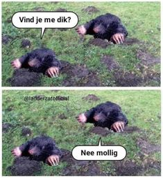 E-mail - Roel Palmaers - Outlook Really Funny, Funny Cute, Punny Puns, Dutch Quotes, Cartoon Jokes, Picture Postcards, Funny Bunnies, Cool Pets, Just Smile