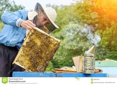 Apiary. The Beekeeper Works With Bees Near The Hives. Apiculture. Stock Photo - Image: 99692726