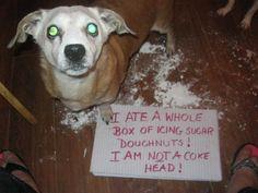 I ate a whole box of icing sugar doughnuts! I am not a coke head!