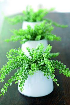11 zimmerpflanzen f r dunkle ecken zimmerpflanzen pinterest pflanzen zimmerpflanzen und. Black Bedroom Furniture Sets. Home Design Ideas